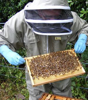 Пчеловодство - очень прибыльный бизнес