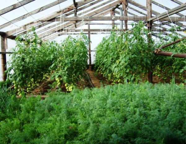 Основное оборудование для выращивания зелени - это теплица