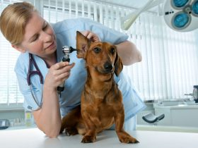 Business veterinary clinic plan