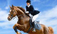 Бизнес-план конного клуба