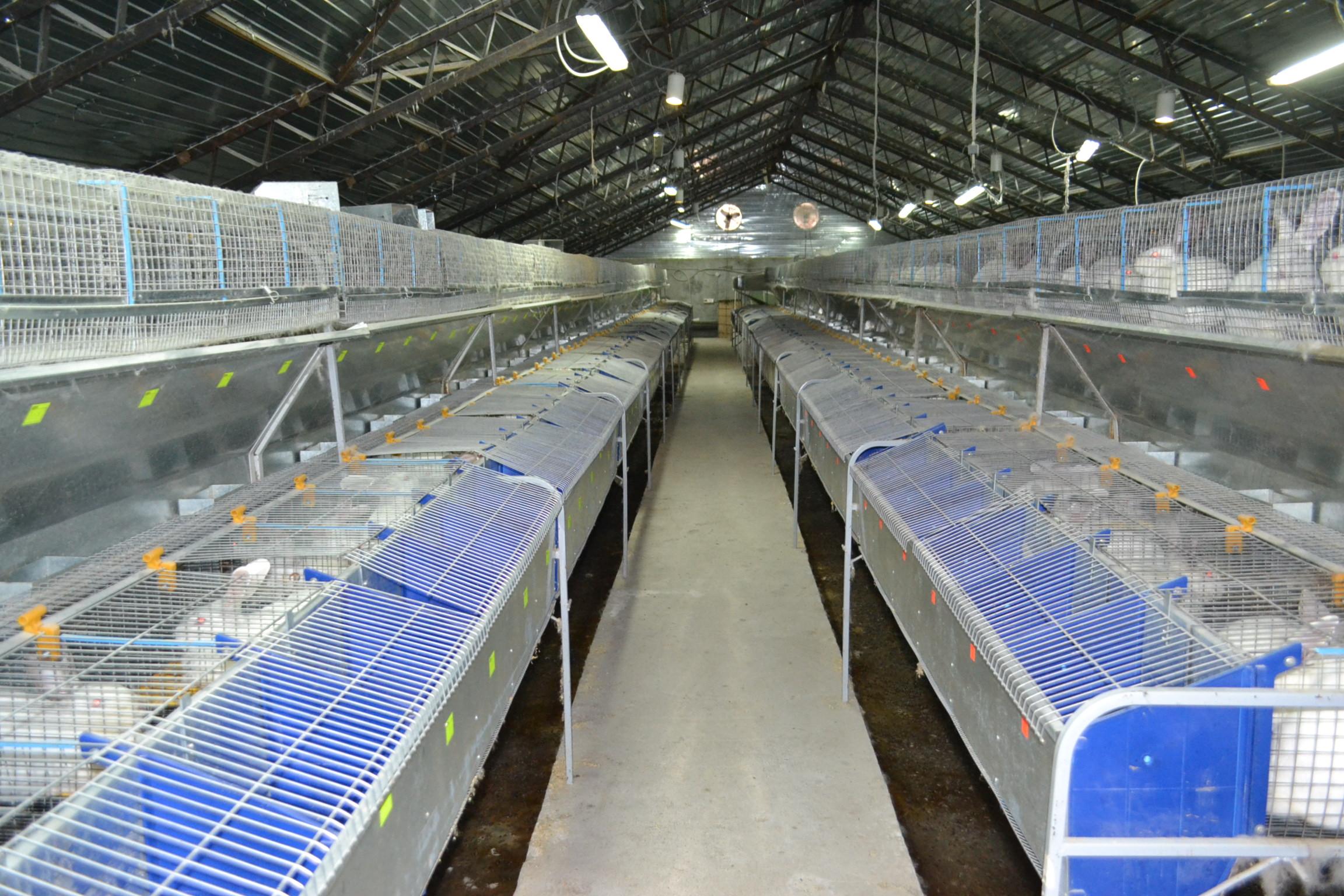 На фото показано помещение с установленными клетками для выращивания кроликов и уборки отходов.
