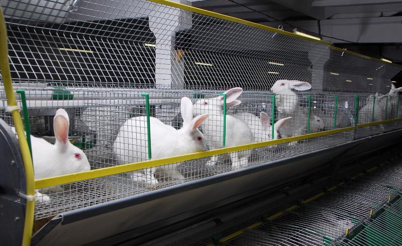 Довольно бодро чувствуют себя кролики в клетках, все чистенькие.